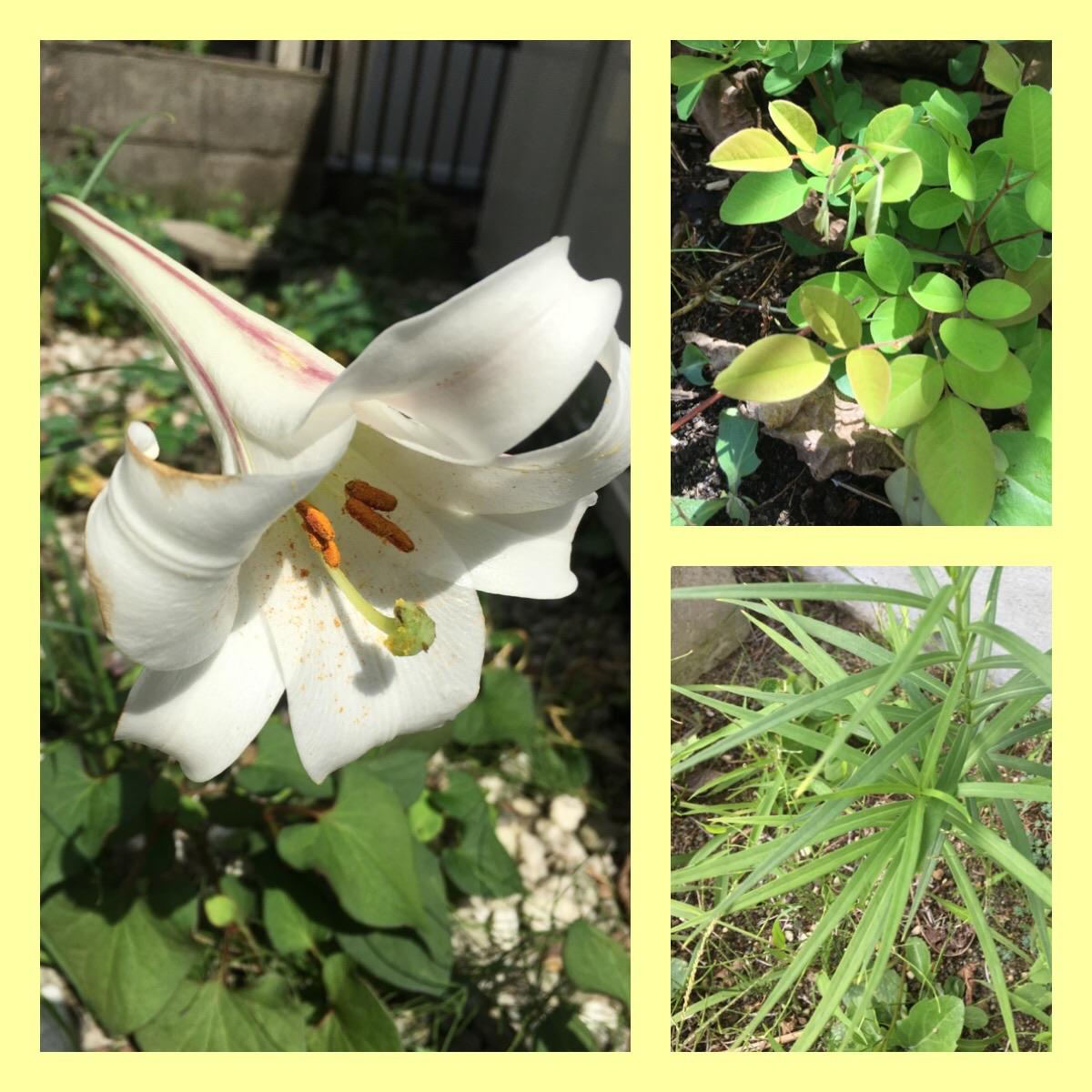 最後のゆり,咲くに時あり,遅くとも綺麗,萩の生命力,宮城県との関わり
