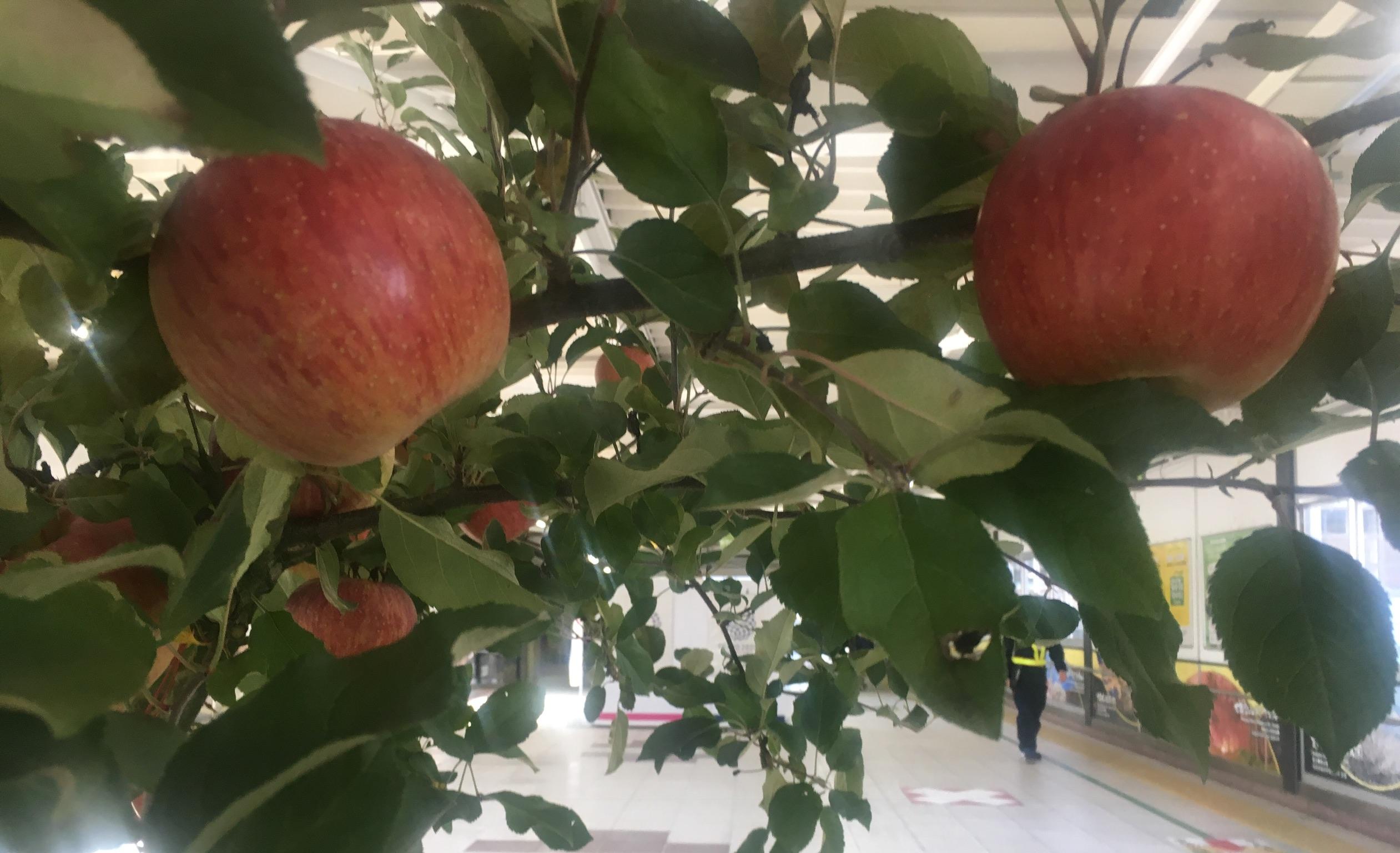 福島駅,コンコース,りんごの木